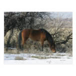 Wild Mustang Horse in the Snow 1 Postcards