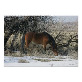 Wild Mustang Horse in the Snow 1 Poster