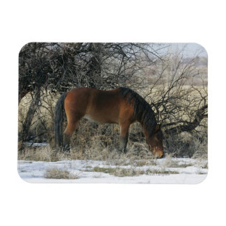 Wild Mustang Horse in the Snow 1 Rectangular Magnet