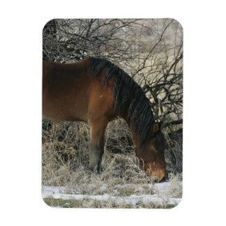 Wild Mustang Horse in the Snow 1 Rectangular Magnets