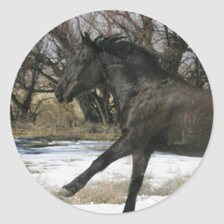 Wild Mustang Horse in the Snow 2 Classic Round Sticker