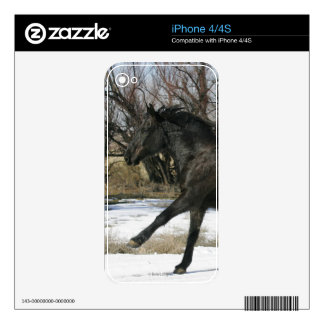 Wild Mustang Horse in the Snow 2 Decal For The iPhone 4