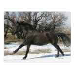 Wild Mustang Horse in the Snow 2 Post Card