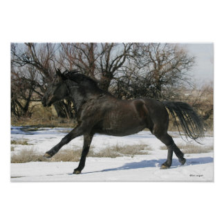 Wild Mustang Horse in the Snow 2 Poster