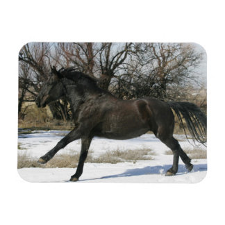 Wild Mustang Horse in the Snow 2 Rectangular Photo Magnet