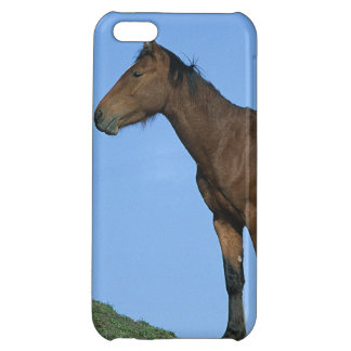 Wild Mustang Horse iPhone 5C Cover
