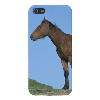 Wild Mustang Horse iPhone SE/5/5s Cover