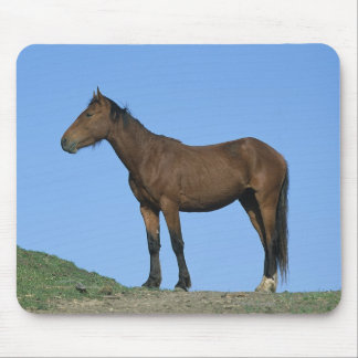 Wild Mustang Horse Mouse Pad