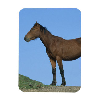 Wild Mustang Horse Rectangle Magnet