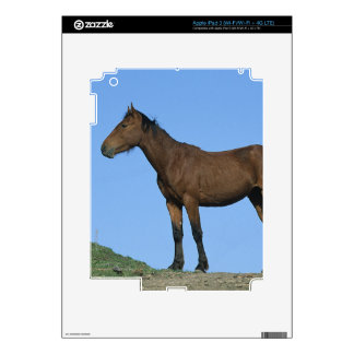 Wild Mustang Horse Skin For iPad 3