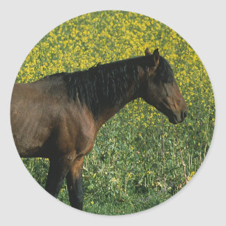 Wild Mustang Horse Standing in Flowers Classic Round Sticker