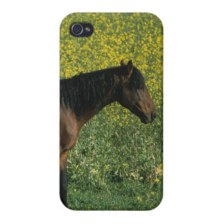Wild Mustang Horse Standing in Flowers iPhone 4 Cover