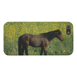 Wild Mustang Horse Standing in Flowers iPhone SE/5/5s Case