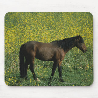 Wild Mustang Horse Standing in Flowers Mouse Pad