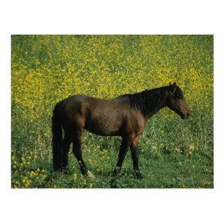 Wild Mustang Horse Standing in Flowers Postcard