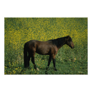 Wild Mustang Horse Standing in Flowers Poster