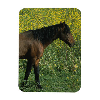 Wild Mustang Horse Standing in Flowers Magnet