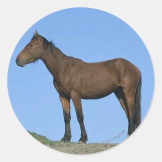 Wild Mustang Horse Sticker