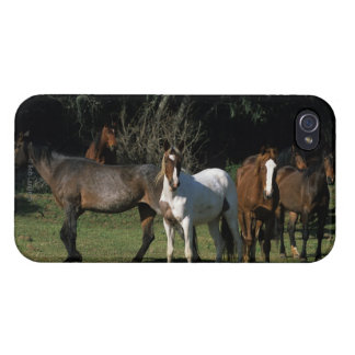 Wild Mustang Horses 1 Cases For iPhone 4