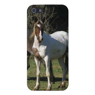 Wild Mustang Horses 1 iPhone SE/5/5s Cover