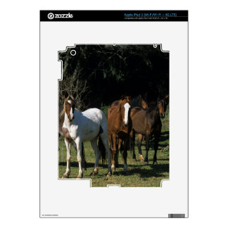 Wild Mustang Horses 1 Skin For iPad 3