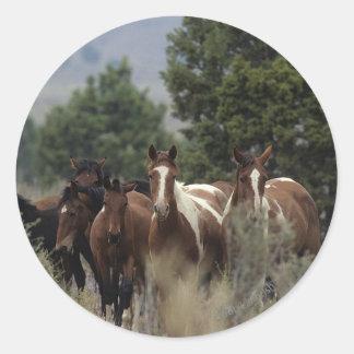 Wild Mustang Horses 2 Classic Round Sticker