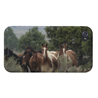 Wild Mustang Horses 2 iPhone 4/4S Cover