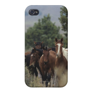 Wild Mustang Horses 2 iPhone 4 Cover