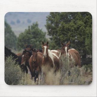 Wild Mustang Horses 2 Mouse Pad