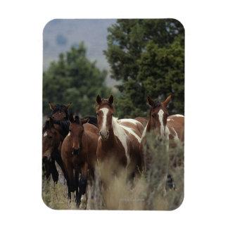 Wild Mustang Horses 2 Rectangular Photo Magnet
