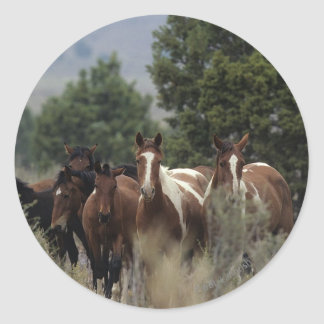 Wild Mustang Horses 2 Round Stickers