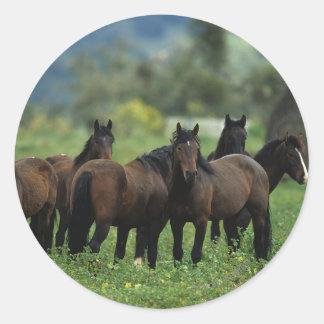 Wild Mustang Horses 3 Classic Round Sticker