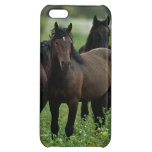 Wild Mustang Horses 3 iPhone 5C Cover