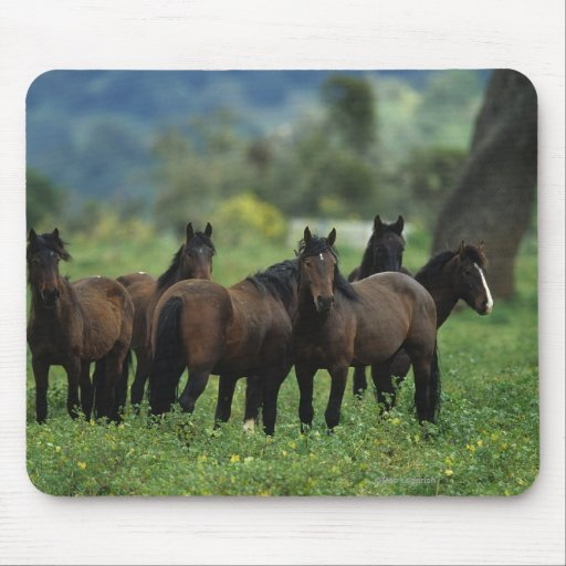 Wild Mustang Horses 3 Mouse Pad
