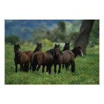 Wild Mustang Horses 3 Poster
