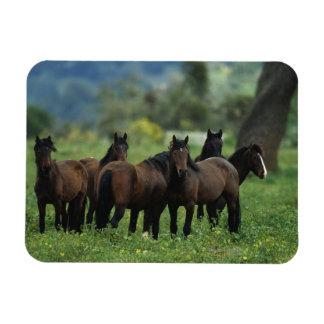 Wild Mustang Horses 3 Rectangular Photo Magnet
