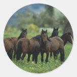 Wild Mustang Horses 3 Sticker