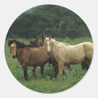 Wild Mustang Horses 4 Classic Round Sticker