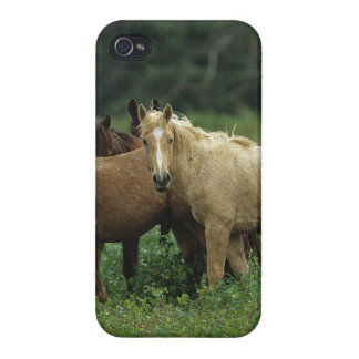Wild Mustang Horses 4 iPhone 4/4S Cases