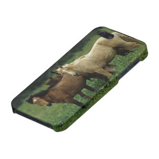 Wild Mustang Horses 4 iPhone SE/5/5s Cover