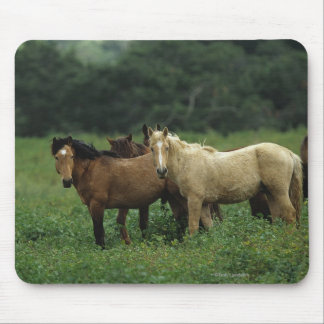 Wild Mustang Horses 4 Mouse Pad