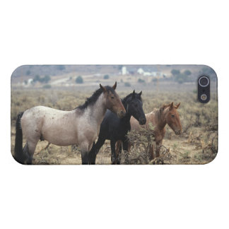 Wild Mustang Horses 5 Case For iPhone SE/5/5s
