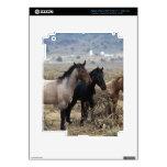 Wild Mustang Horses 5 iPad 3 Decal
