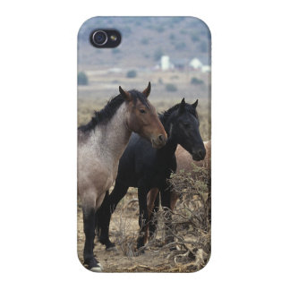 Wild Mustang Horses 5 iPhone 4/4S Covers