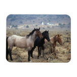 Wild Mustang Horses 5 Magnets