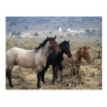 Wild Mustang Horses 5 Postcards