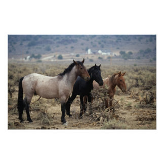 Wild Mustang Horses 5 Poster