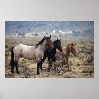 Wild Mustang Horses 5 Print