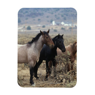 Wild Mustang Horses 5 Rectangular Photo Magnet