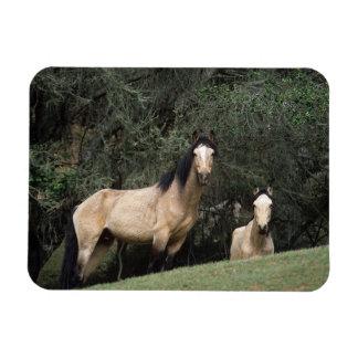 Wild Mustang Horses 6 Magnet